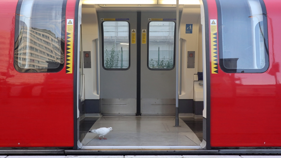 A bird walks inside a commuter underground tube train