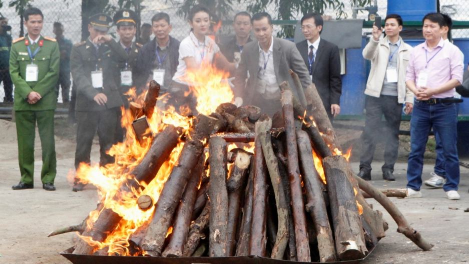 rhino and elephant horns destroyed in vietnam