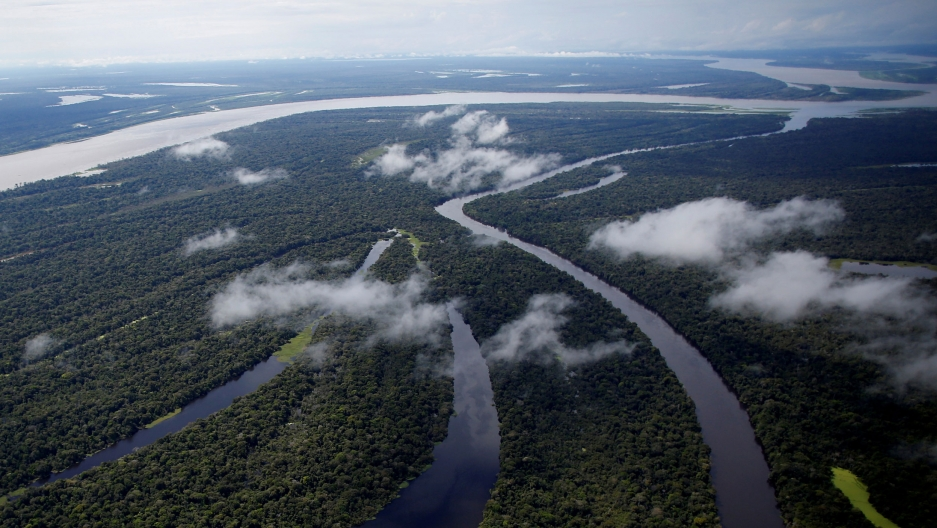 The Mamiraua Sustainable Development Reserve is shown from above where four bodies of water connect together weaving in-between trees.