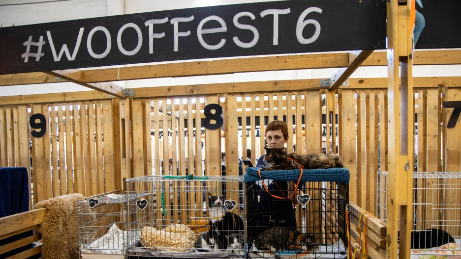 "A woman is shown standing behind three cats in cages below a wooden sign that says, ""Woof fest."""