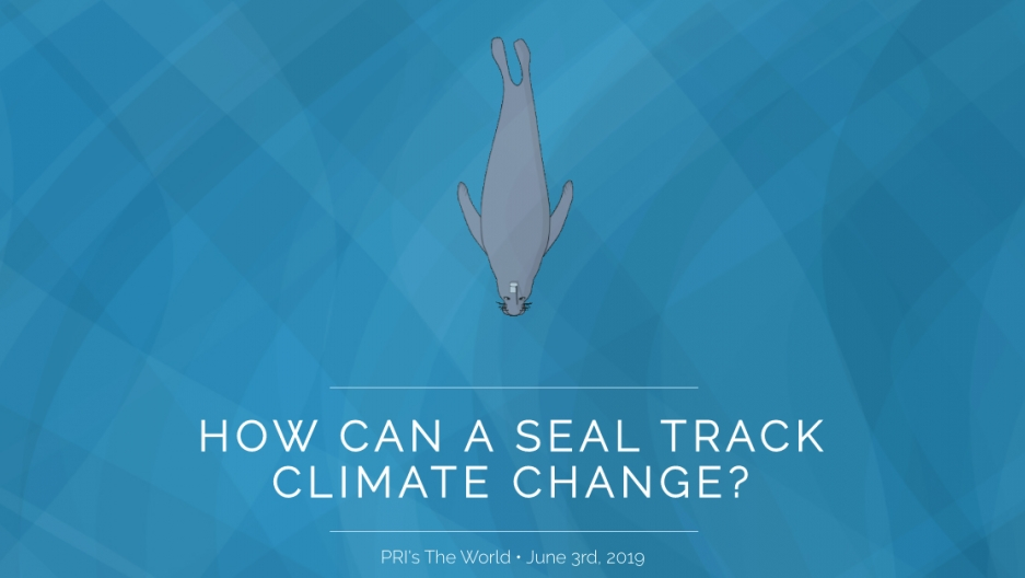 "Headline reads, ""How can a seal track climate change?"" with an animated elephant seal"
