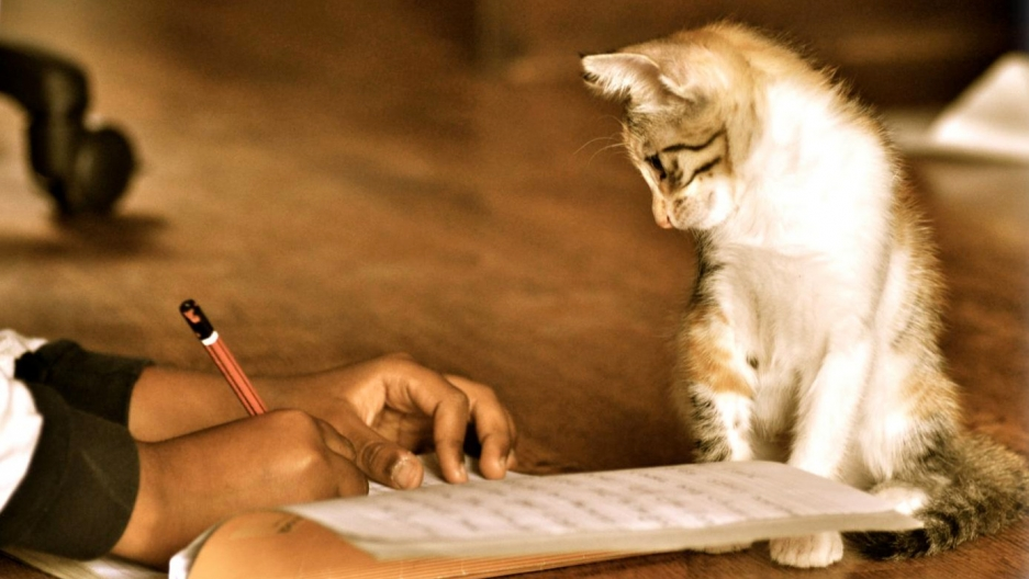 A cat stands next to someone writing.