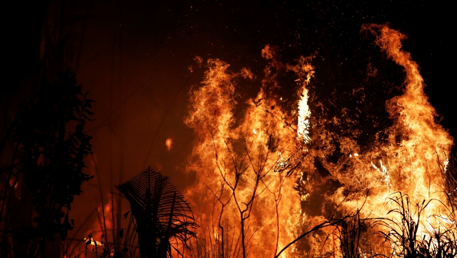 Amazon Fires 8 Ways You Can Help Stop The Rainforest Burning