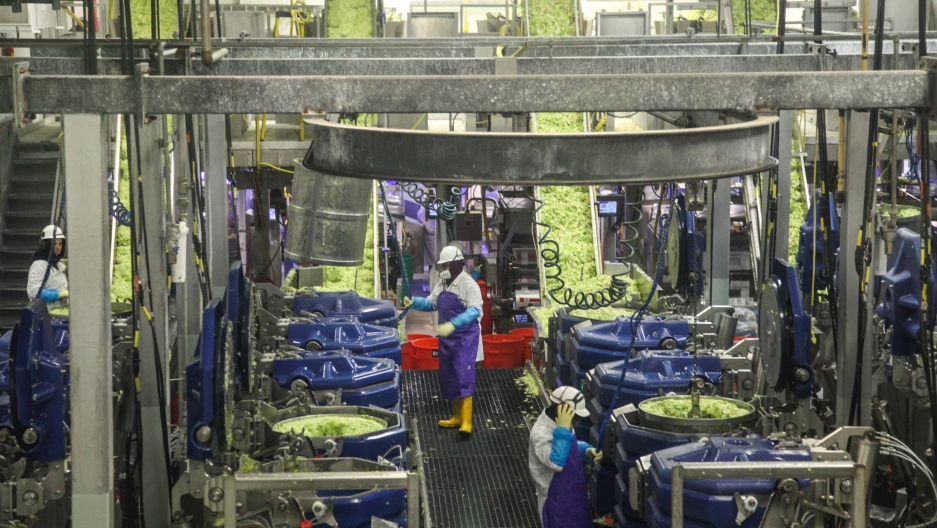 Workers wash and dry chopped lettuce at a Taylor Farms processing plant in Salinas, California on September 10, 2019. In recent years, the company has started incorporating automation in its facility.