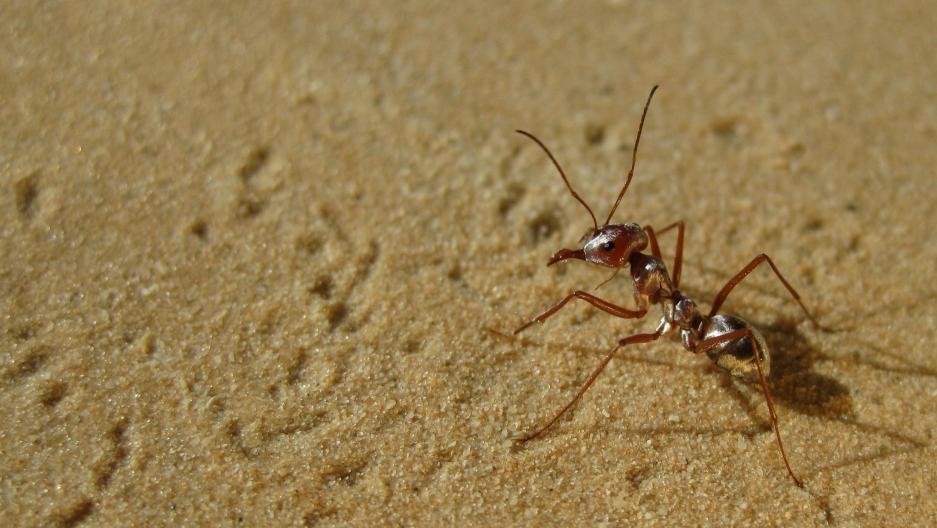 The Hidden World of Ants