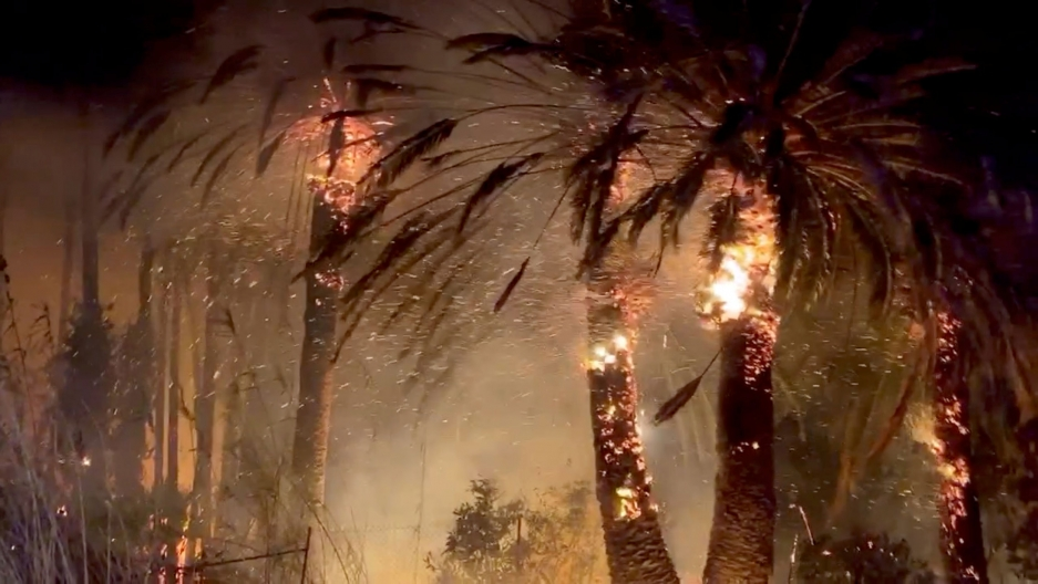 Palm trees on fire