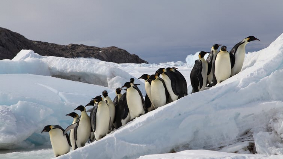 Penguins stand on ice in Antarctica.
