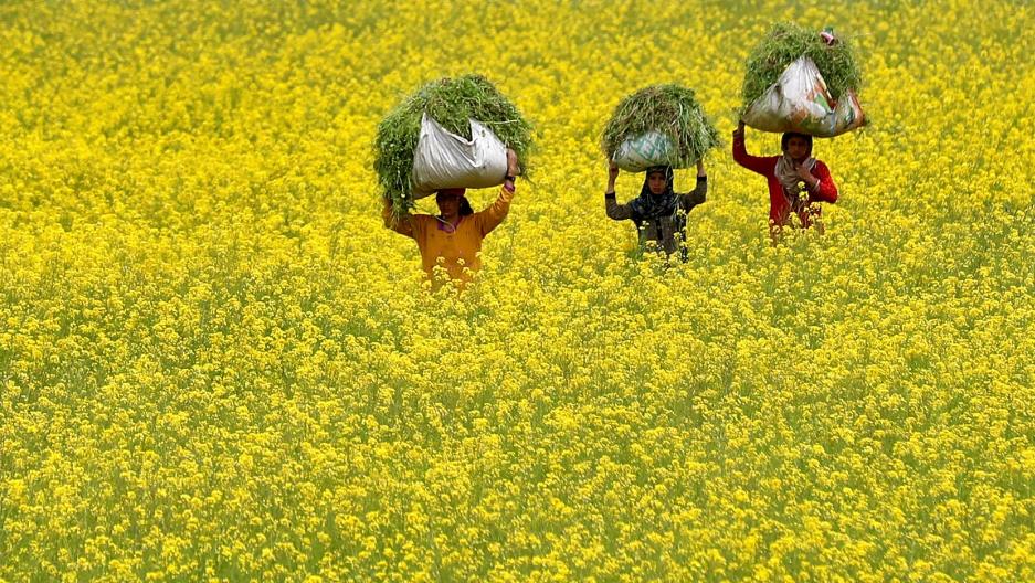 Women carry baskets in a field