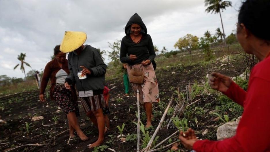 Sumbanese villagers work on a field seeding peanuts in Hamba Praing village, Kanatang district, East Sumba Regency, East Nusa Tenggara province,Indonesia, Feb.23, 2020.