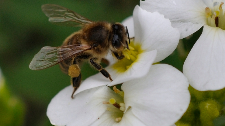 Bees and climate change