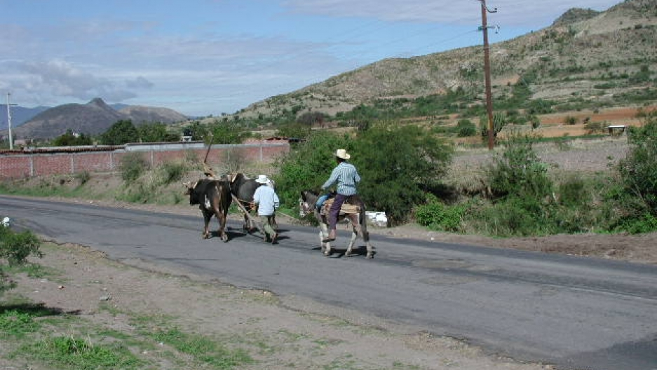 Two men walk on a street surrounded by hills. One man is riding a donkey and the other is walking alongside two cows.