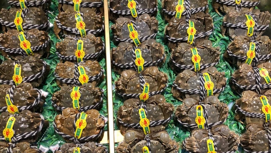 Yangcheng Lake hairy crabs for sale.