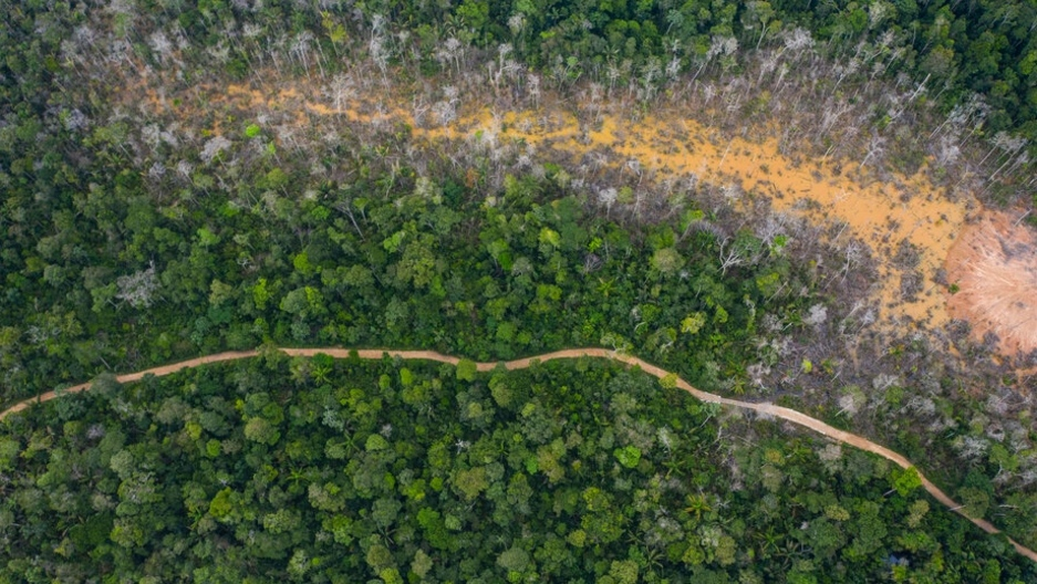 Aerial shot of green trees in large forest.