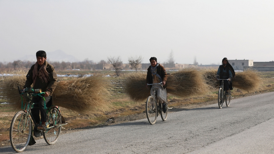 Three people are shown riding bicycles along a road carrying large bundles of harvested shrubs on the back of their bikes.