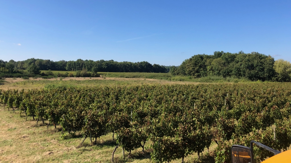 The Ducourt family vineyard in France.