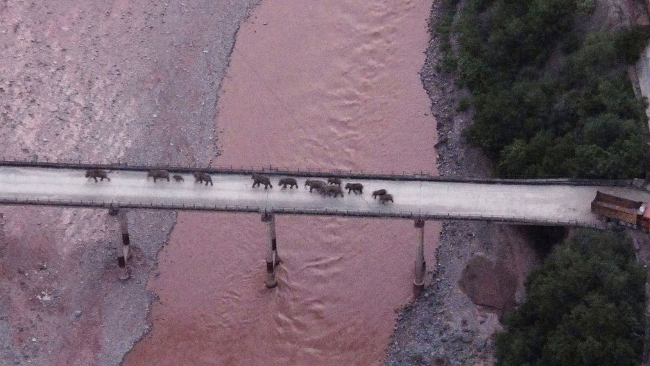In this photo released by the Yunnan Provincial Command Center for the Safety and Monitoring of North Migrating Asian Elephants, a herd of wandering elephants cross a river using a highway near Yuxi city, Yuanjiang county in southwestern China's Yunnan Pr