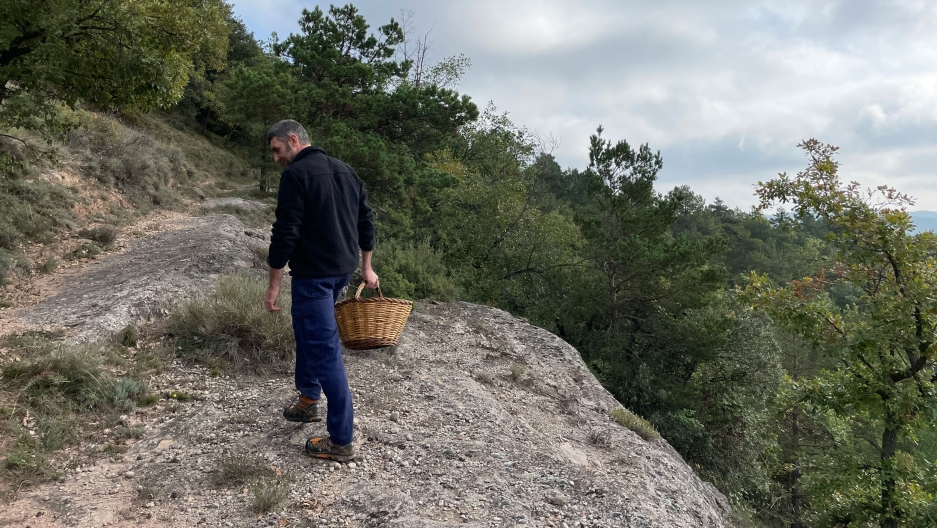 Pep González, a longtime mushroom forager, on a hunt for mushrooms in the forest.