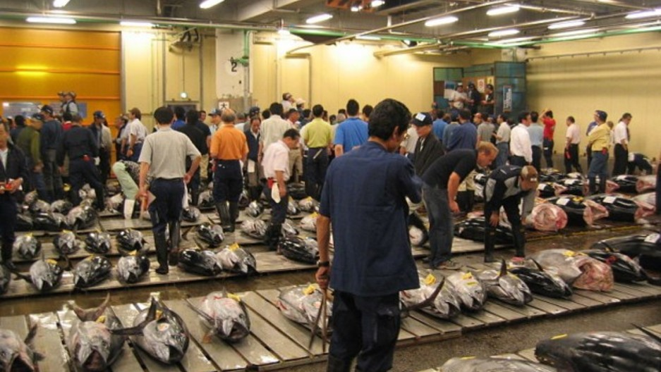 Bidding for tuna at the biggest fish market in the world for Wholesale fish market near me