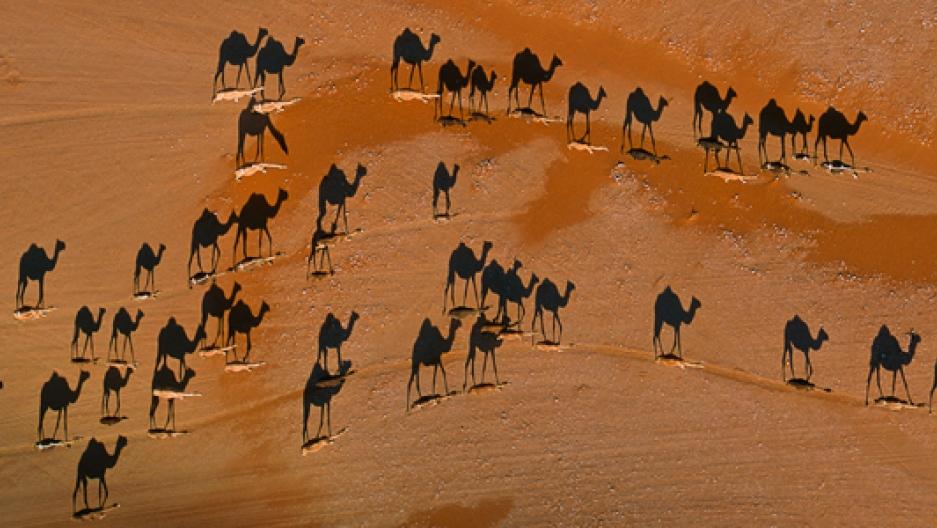 George steinmetz camel photo