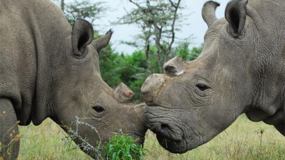 anti poaching team kenya pdf