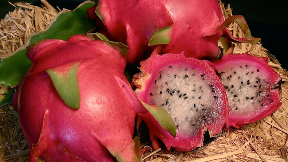 dragon fruit makes its culinary journey to us farms and kitchens