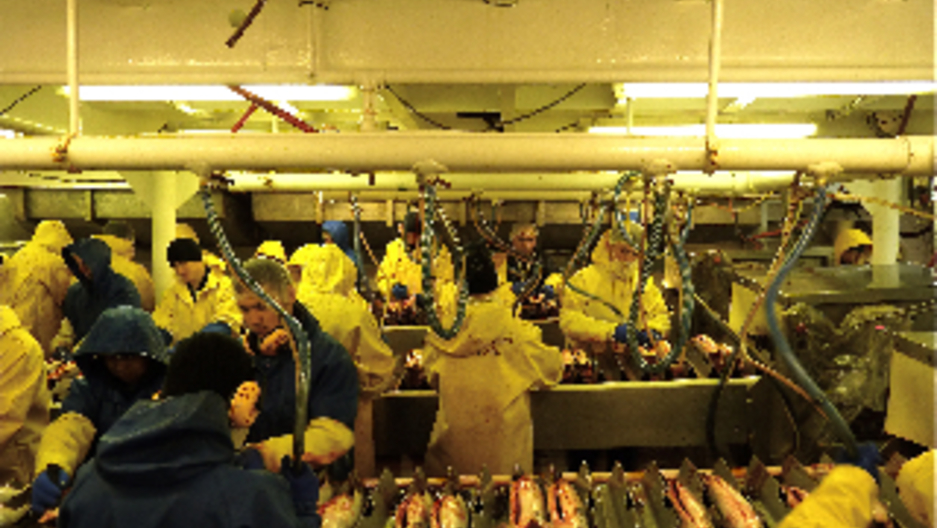 Why Foreign Students are Hired for Alaskan Fish Processing