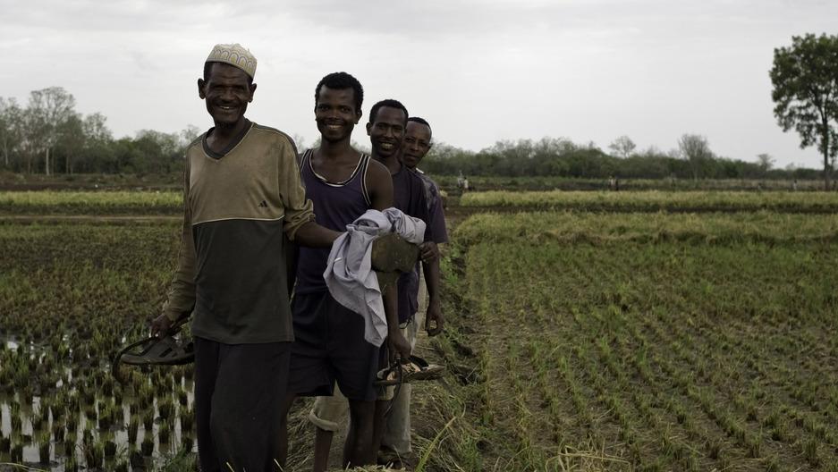 Saudi Company Leases Ethiopian Land for Rice Export | Public Radio