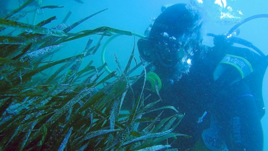 spanish scientists fishermen work together to save seagrass
