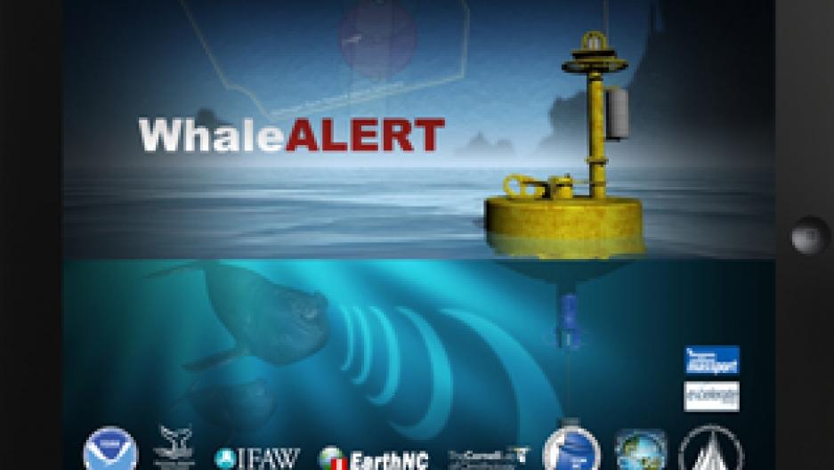 Whale Alert
