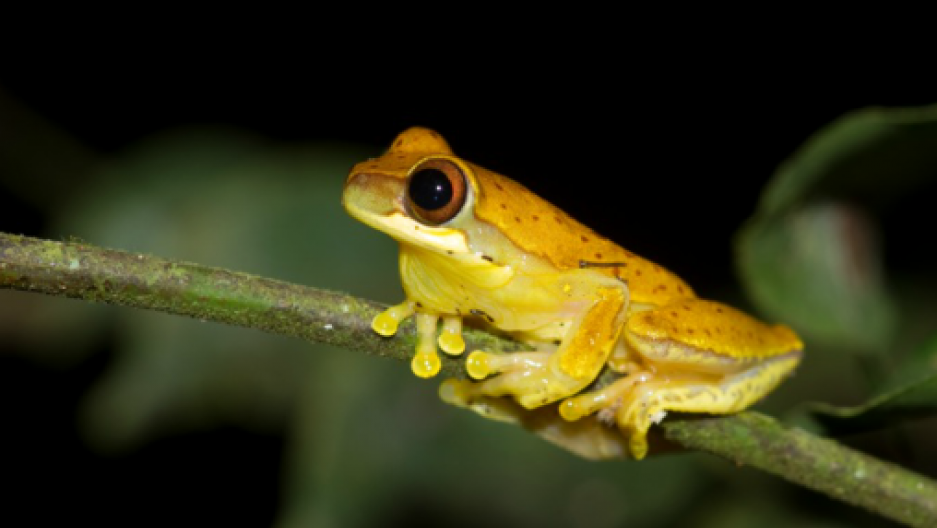 Exotic, Frogs and Search on Pinterest