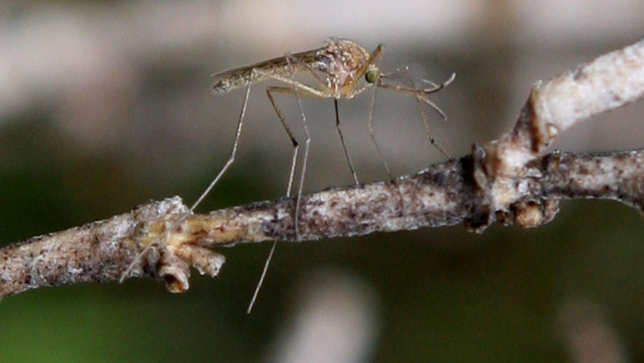 Insect Spy Drone Flies Spies And Injects Poison