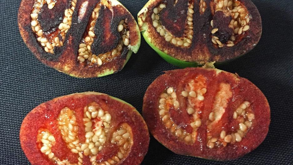unripened fruits of Solanum ossicruentum