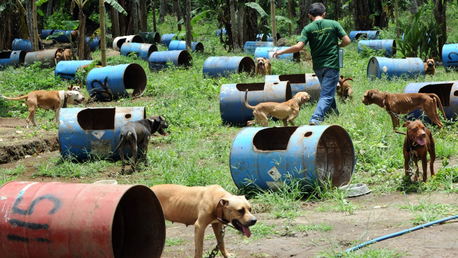 Nearly 370 pit bulls seized in massive Southeast dog