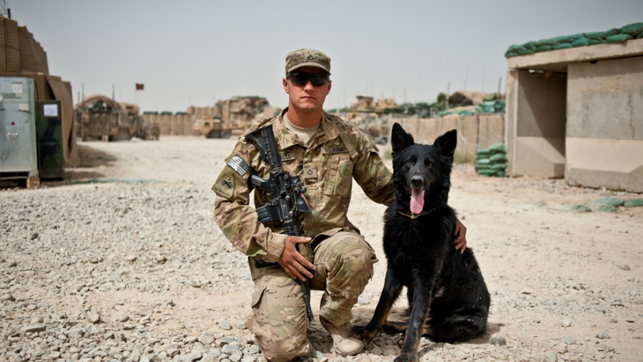Image result for military dogs