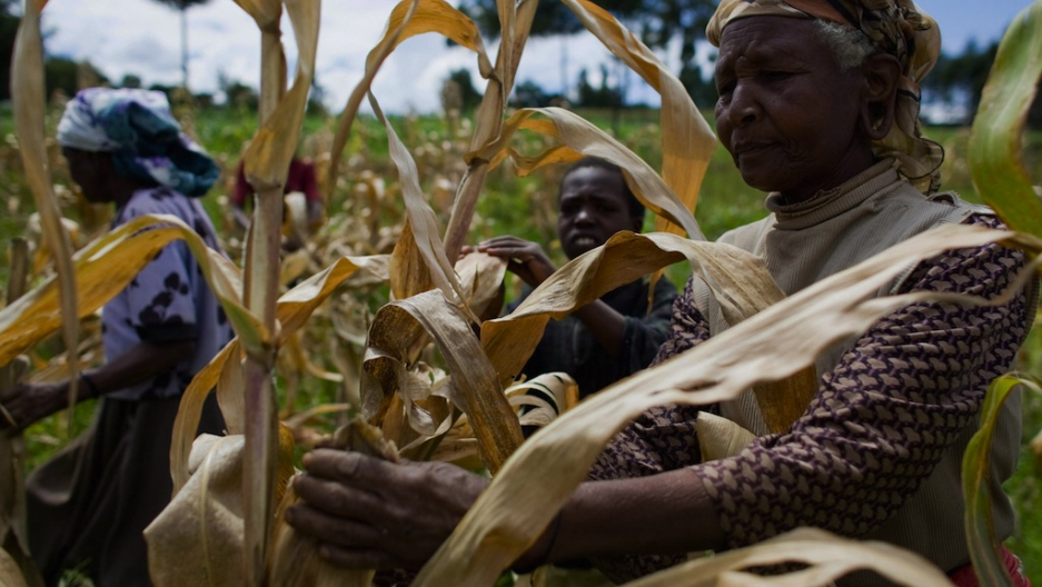 Most African leaders not making promised investments in agriculture