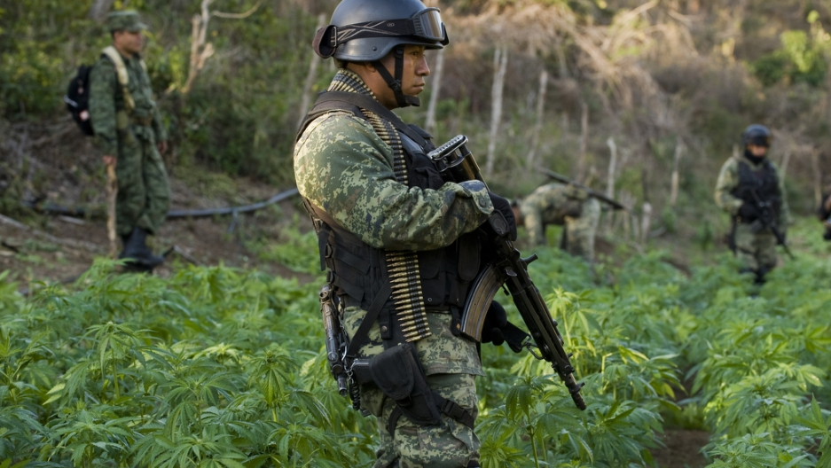 A Mexican soldier guards a marijuana plantation in Sinaloa state, Mexico, on Jan. 30, 2012.
