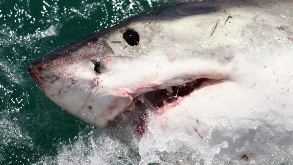 sharks with laser beams attached to their heads becomes reality
