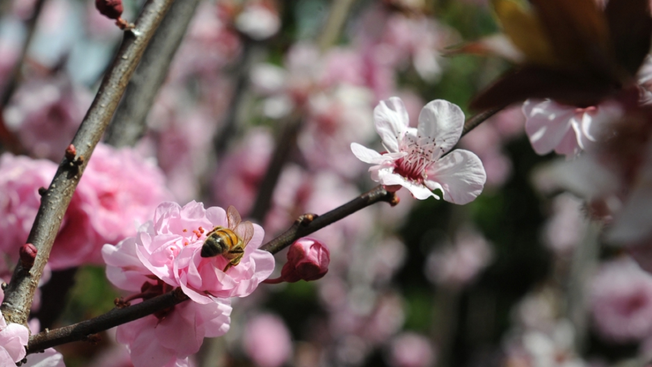Global Warming Brings Early Us Spring Flowers Study Says Public