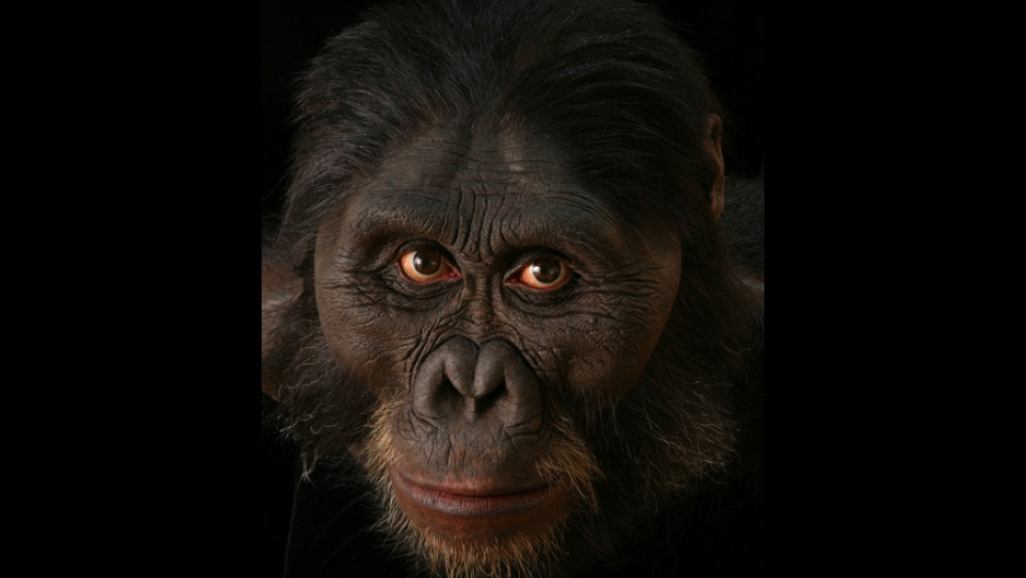 Gurche - Astralopithecus head