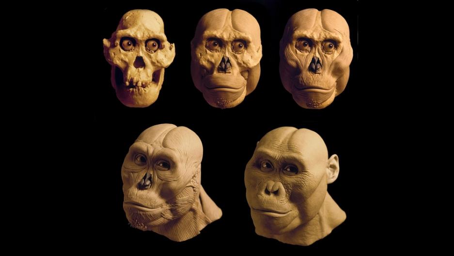 Gurche - Astralopithecus