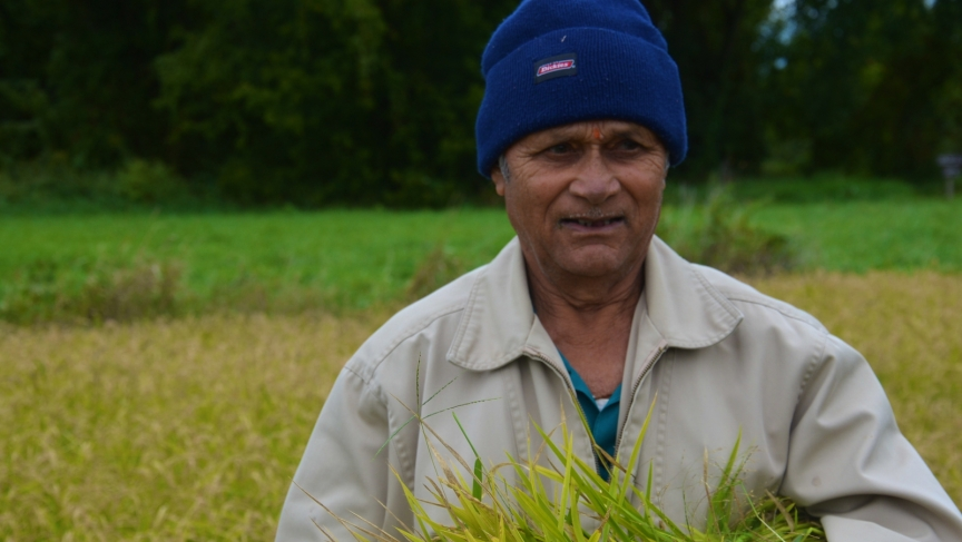 Ashok Dahal, a Bhutanese elder, grew up harvesting rice. Everyone had to learn how to grow rice in Bhutan, he says, regardless of their standing in the community.