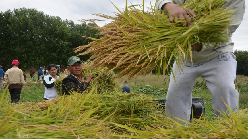 If all goes well with next year's rice paddy, the Bhutanese community in Vermont will be able to eat rice they grew and harvested themselves.