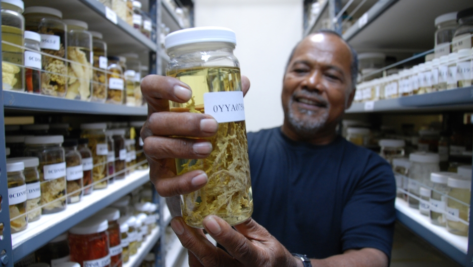 """Emilio Basilius of the Coral Reef Research Foundation holds up one of the hundreds of samples of marine organisms collected in Palau for the National Cancer Institute in the U.S. Basilius says the work has """"opened my eyes to diversity of things in the wa"""