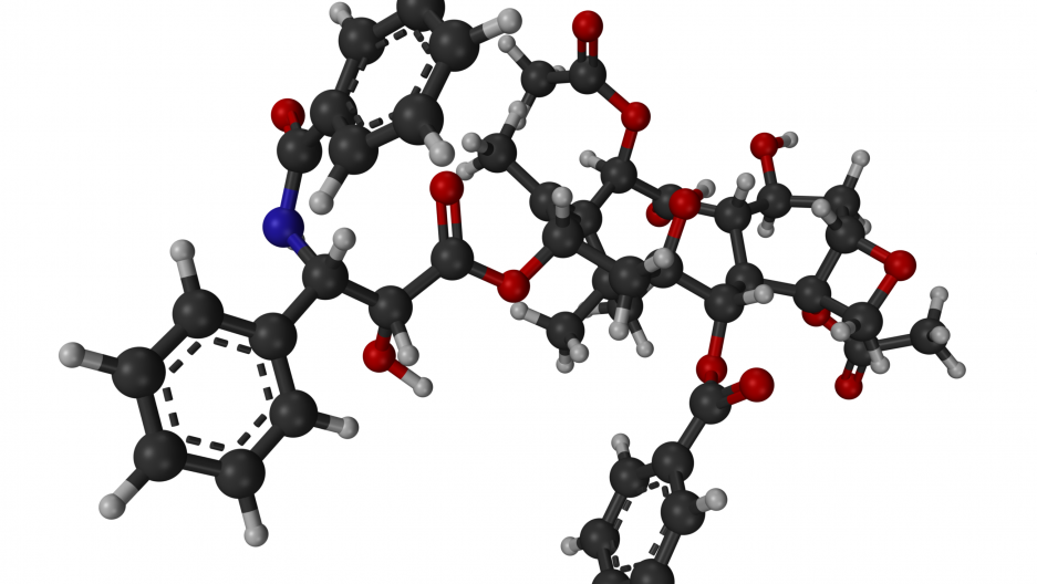 The hit rate for cancer drugs derived from natural compounds is low, but scientists say drugs like Taxol, derived from the Yew, tree make it worth the effort.
