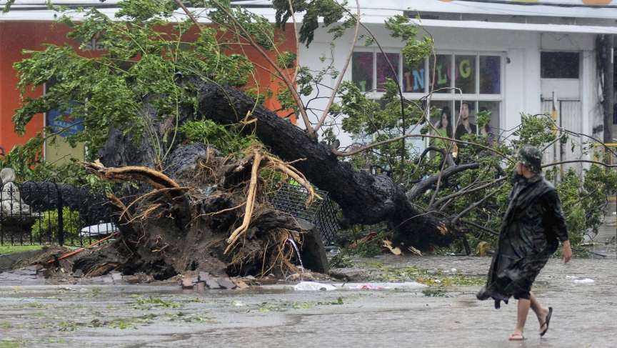A man walks past a tree uprooted by strong winds brought by super Typhoon Haiyan that hit Cebu city, central Philippines November 8, 2013.
