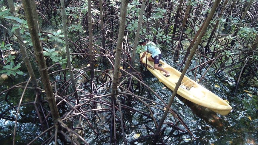 mangroves 2