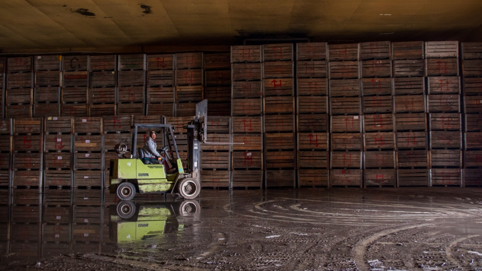 A worker moves apple crates at Vicente Robles' packinghouse in Bachíniva, Chihuahua.