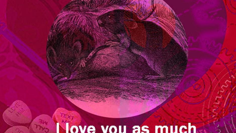 Rational Valentine - Vole