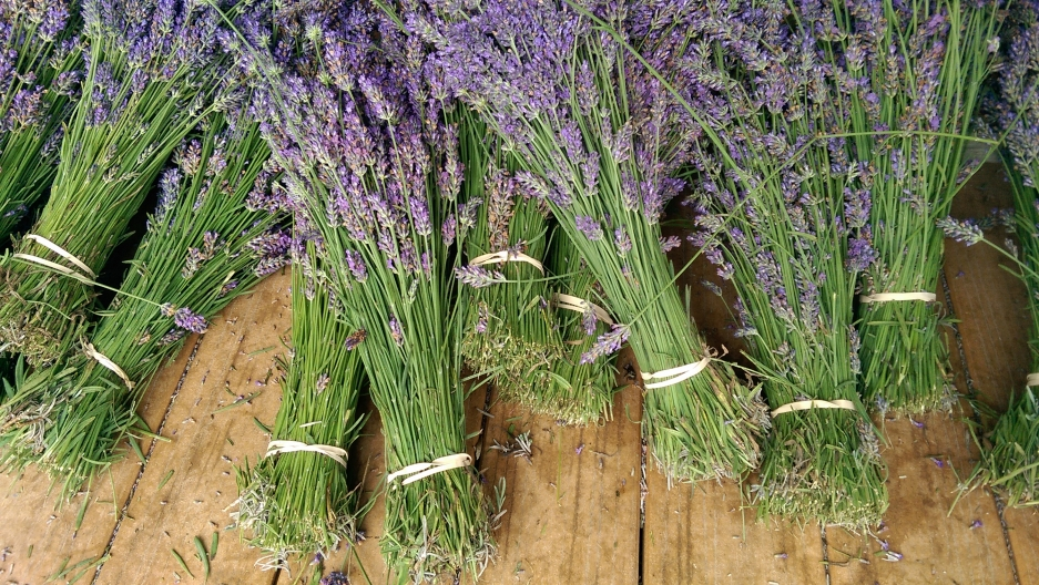 Lavender by the Bay boasts some 60,000 lavender plants