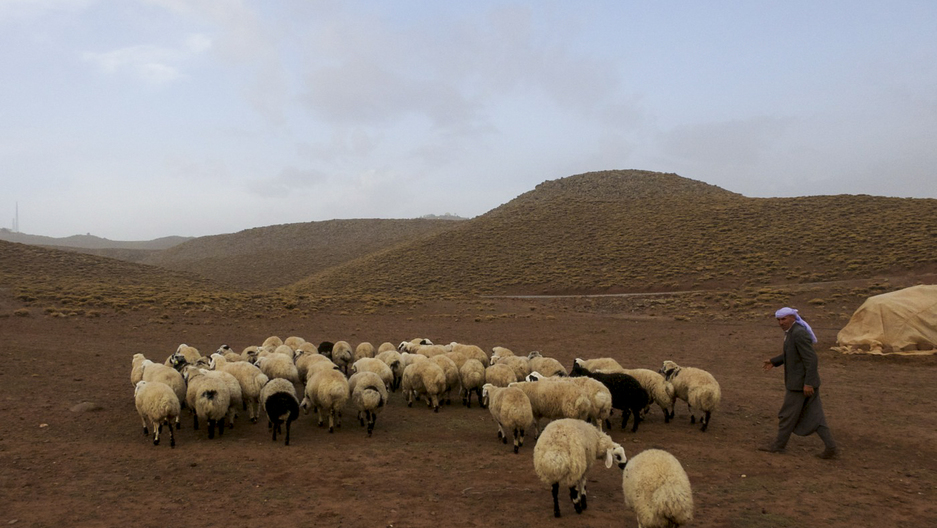Seydo, a Kurdish nomad, with his flock in southeastern Turkey